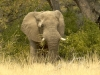 namibia-country-lodges-activity-viewing-elephant-pic-15