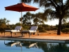 zebra_pool-lounges