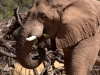 namibia-country-lodges-activity-viewing-elephant-pic-5
