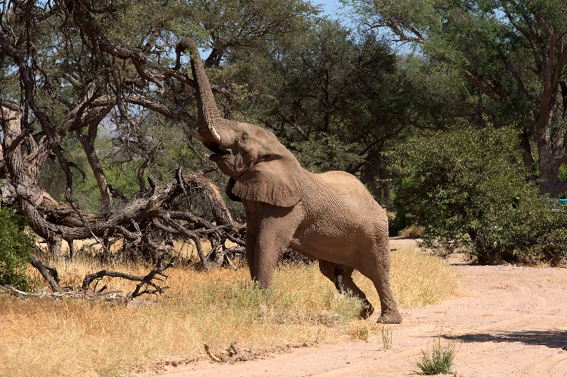 namibia-country-lodges-activity-viewing-elephant-pic-8