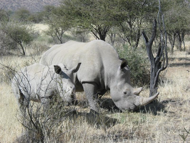 rhino-mom-child