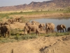 namibia-country-lodges-desert-elephant-321