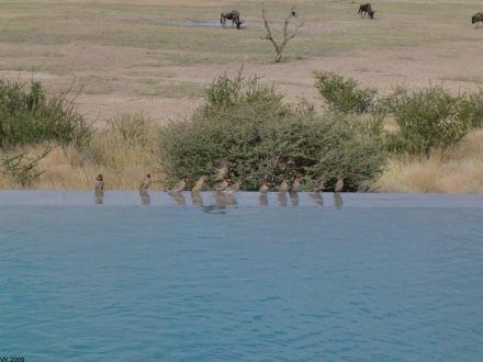 intu-afrika-game-ranch-6