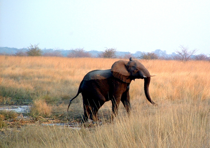 025-namushasha-elephant