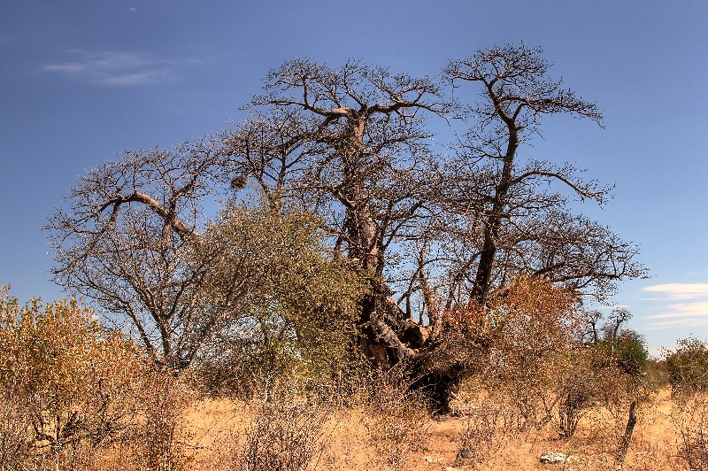 namibia-country-lodges-tree-baobab-pic-4