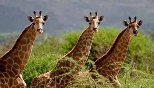 namibia-lodging-safari-06