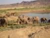namibia-country-lodges-desert-elephant-321