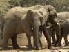 namibia-country-lodges-activity-viewing-elephant-pic-16